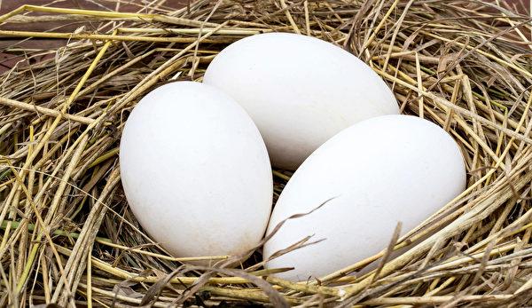 鹅肉的禁忌-鹅蛋