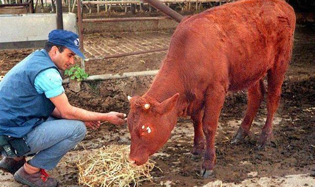圣经,预言,红牛