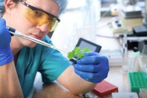 益生菌,益生元推荐,肠道益生菌-研发保健品