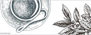 饮茶 记忆力-茶