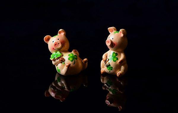 猪的智慧 猪年结善缘 诸事大吉