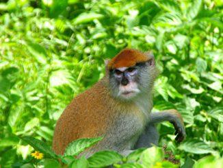 郭子章 猴子