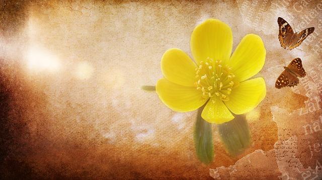 立春第一候的花信风,点开迎春花,锦绣满人间