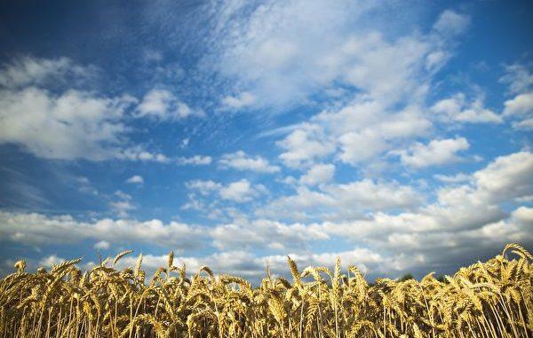 农夫把太阳献给国君