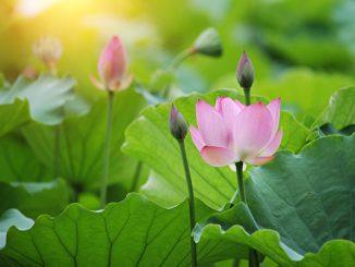 只要在生命的最后时刻能及时醒悟,就是一个有救的生命,或许来生成为有福之人。(fotolia)