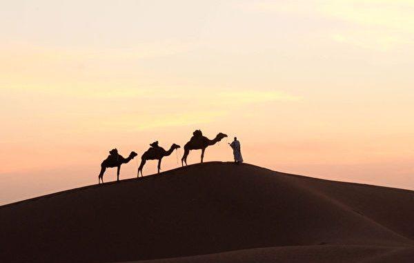 撒哈拉大沙漠 善良 坚持