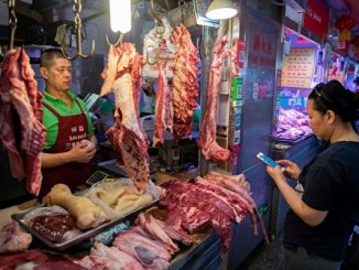 抢肉, 中国, 猪肉, 全球肉类价格, 猪瘟