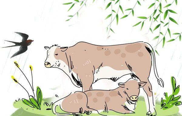 老牛舐犊 父母 希望之声