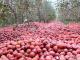 苹果, 水果滞销, 超市, 果农
